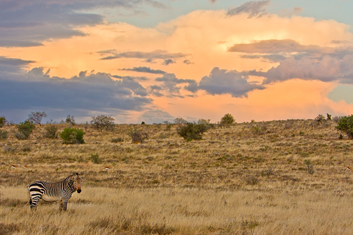 South Africa's National Parks - Mountain Zebra National Park